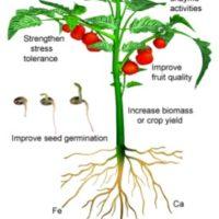 Using titanium to increase crop yields