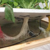Six things to consider when running experiments in hydroponics