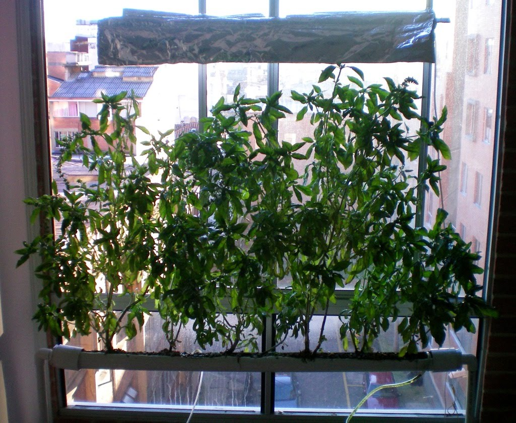 Simple Hydroponic System